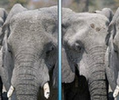 2 Images 5 Differences Wildlife