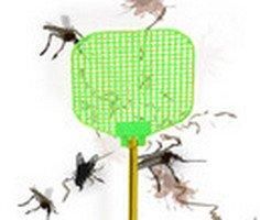 Insecto Smash